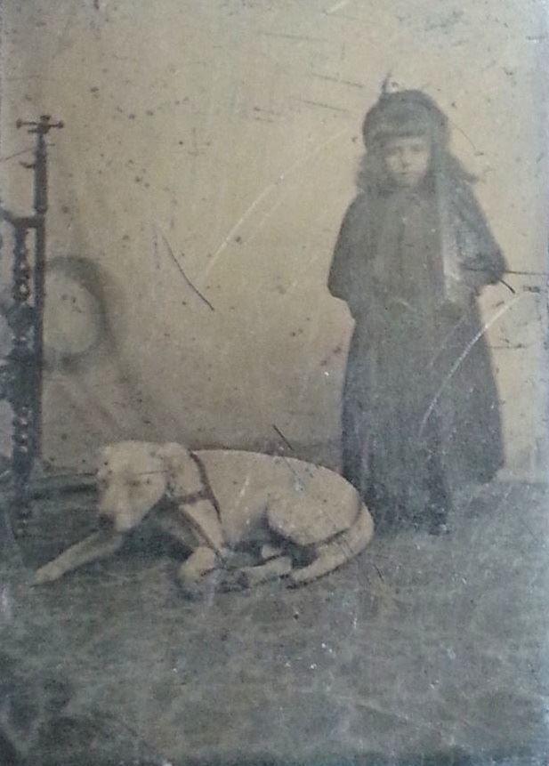 Bull Terrier 1885 colección C.H.
