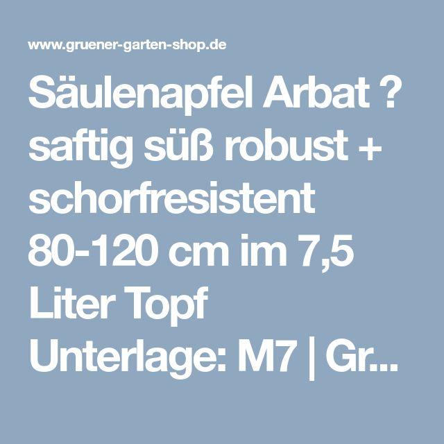 Säulenapfel Arbat Ⓡ saftig süß robust + schorfresistent 80-120 cm im 7,5 Liter Topf Unterlage: M7 | Grüner Garten Shop