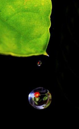 Reflection in Falling Waterdrops by Prabaljit Sarkar