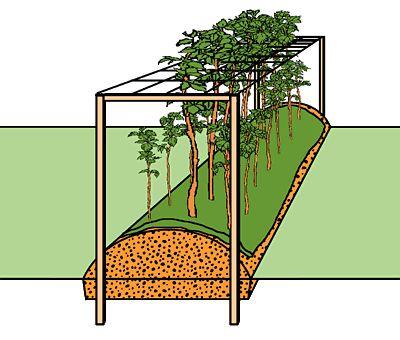 www.pflanzanleitung.ch - Himbeeren | Backen | Garden ...