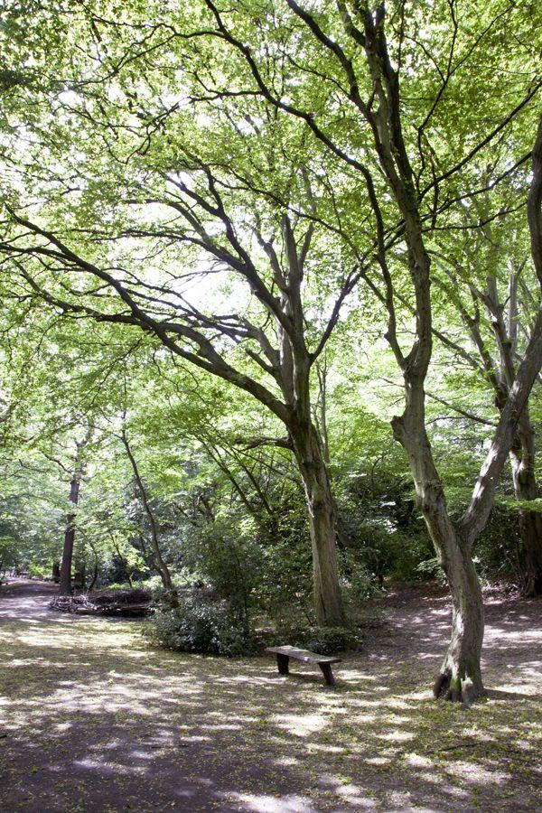 queen's wood - highgate - london