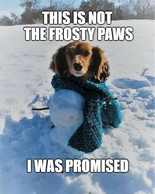 Pin By Ida On Weenie Bums Funny Dachshund Frosty Paws Puppy
