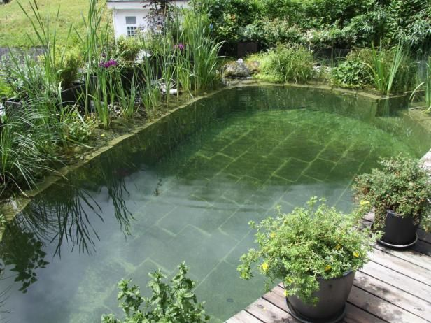 This pond by BioNova Natural Pools is perfect for a quick wade in the summer heat.