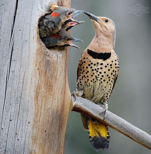 Yellow flicker bird - photo#6