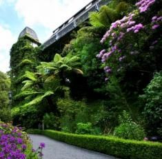 Wellington Botanic Garden. Wellington wedding venue.