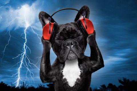 Miedo a ruidos en los perros