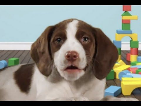Happy Birthday Rock Song - Dog playing guitar - Funny Greeting Card - Human Dog - YouTube