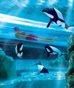 The Dolphin Plunge, Aquatica water park, Orlando, Florida.! Check this one off! The exact same one I got on 2 years ago! Ugh time flies so fast I wish I could go back it was so much fun!!