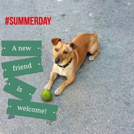#summerday #bestfriend #dog