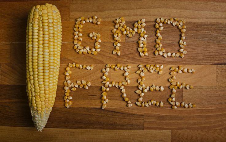 GMO to śmierć na talerzu – o tym pisaliśmy już w artykule dostępnym tutaj. Wśród wielu genetycznie zmodyfikowanych produktów spożywczych