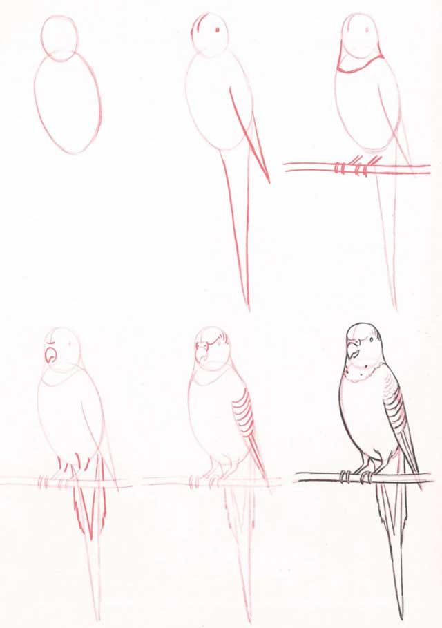 Learn to draw: Budgie must try this