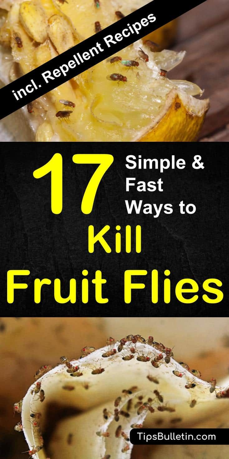 how to get rid of fruit flies - 17 simple & fast ways to