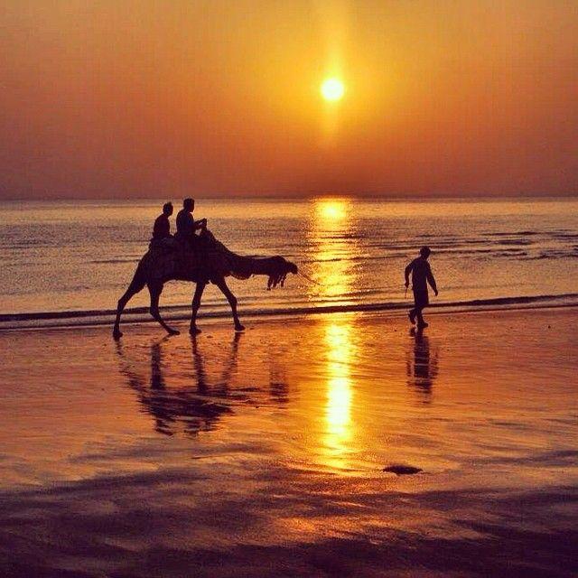 #silhouette #InstaCoverShot #gujrat #camel #beach #india