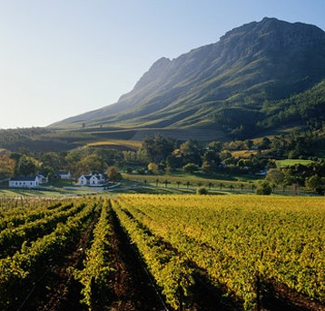 Stellenbosch, the African equivalent of Napa.