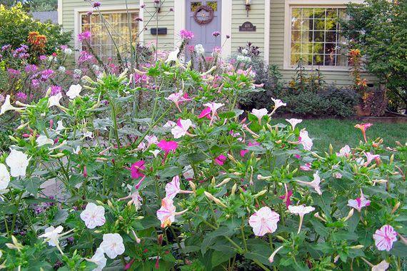 Best 25 drought resistant plants ideas on pinterest for Indoor gardening for dummies