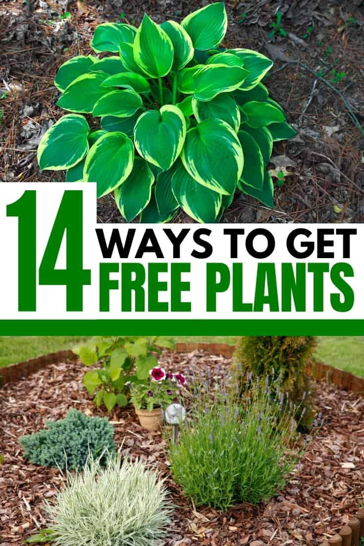 14 Ways To Get Free Or Cheap Plants For Your Garden Whole New Mom Plants Free Plants Cheap Plants