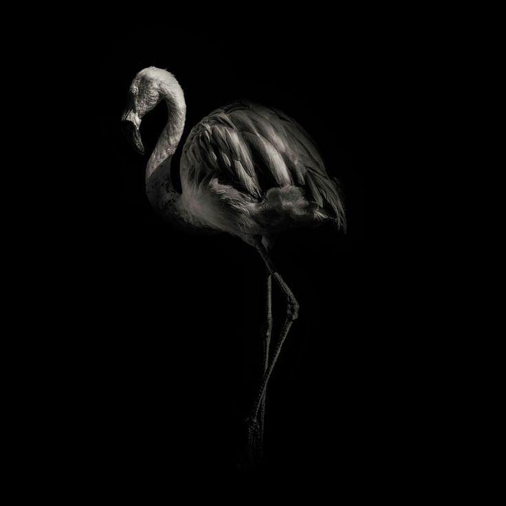 Best Ph Antii Viitala Images On Pinterest Black And White - Captivating black and white animal portraits by antti viitala