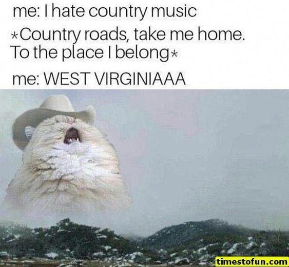 20 Tiere Meme Hilarious Kann nicht aufhören zu lachen