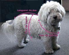patron tricot manteau chien gratuit