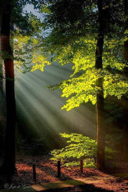 Raking light through the trees, a glorious place to be.