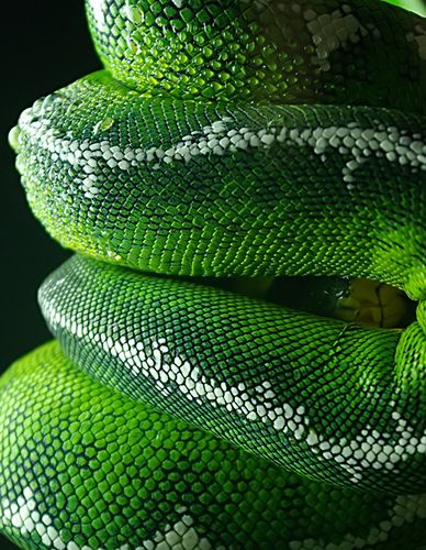 Green snake skin coils. What a great inspiration for lampwork beads! MonaRaeBeads.etsy.com
