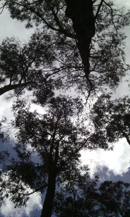 Trees Árboles Tomando un descanso, algo de naturaleza y sol
