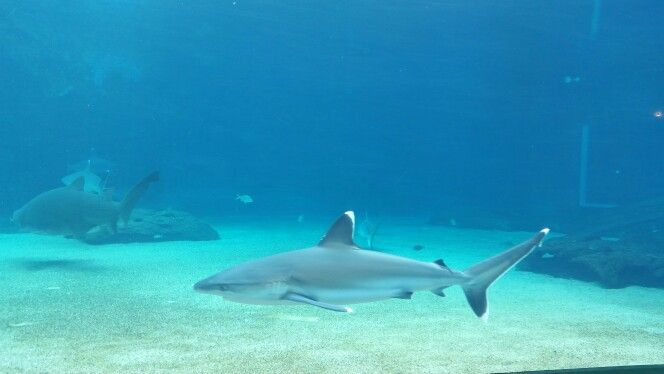 Sharks in South Africa.