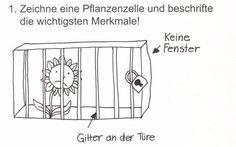 """""""Zeichne eine Pflanzenzelle!"""""""