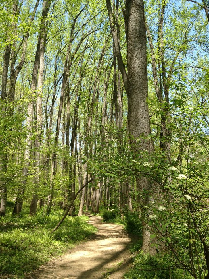 Happy National Trails Day! The Fairfax Cross County Trail offers 40 miles of beautiful hiking from the Potomac to the Occoquan River in Northern Virginia, near DC.