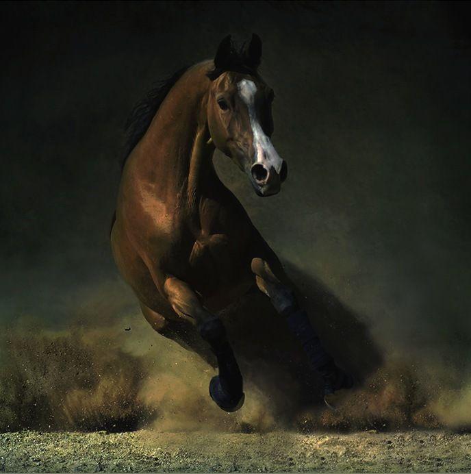 Majestuosa Belleza - caballos árabes y andaluces