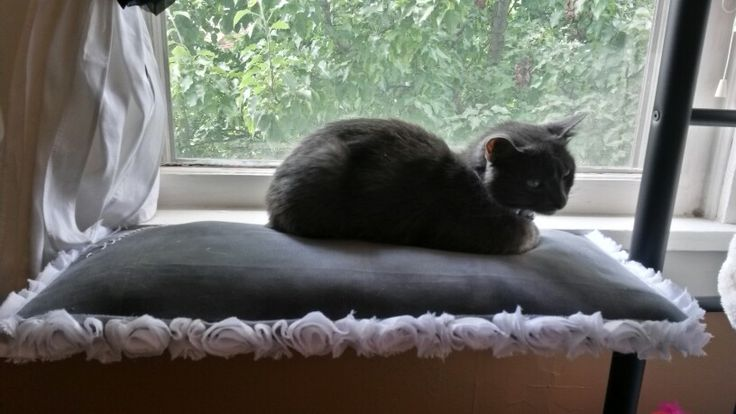 Diy Cat Window Seat Diy Cats Cat Window Pets