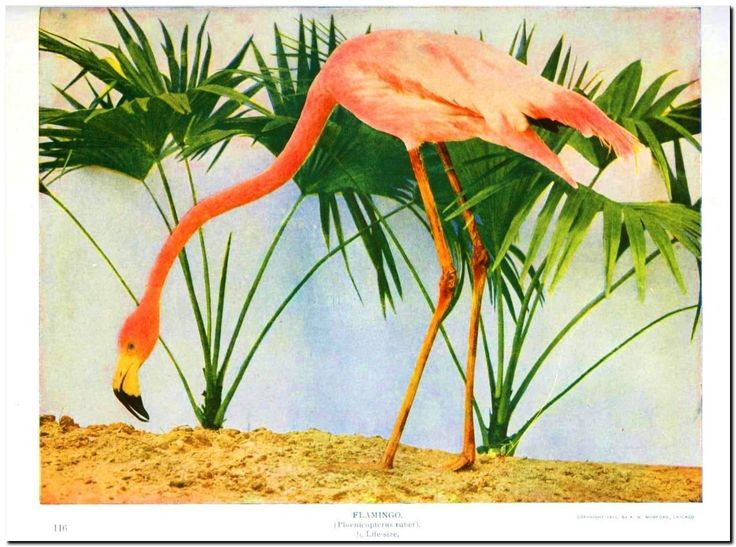 "Vintage Flamingo Illustration watercolor Canvas Art Print - 10x8"" FOR SALE • AUD 12.99 • See Photos! Money Back Guarantee. This product is a Premium Canvas Art Print suitable for framing. It is produced on thick, durable cotton canvas with a matte finish. It is archival quality, so your artwork 232133525356"