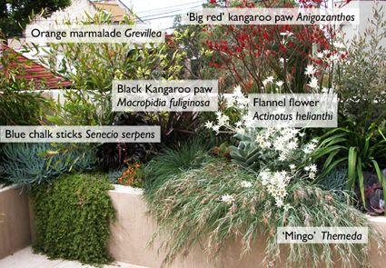 Australian Natives - full sun plants