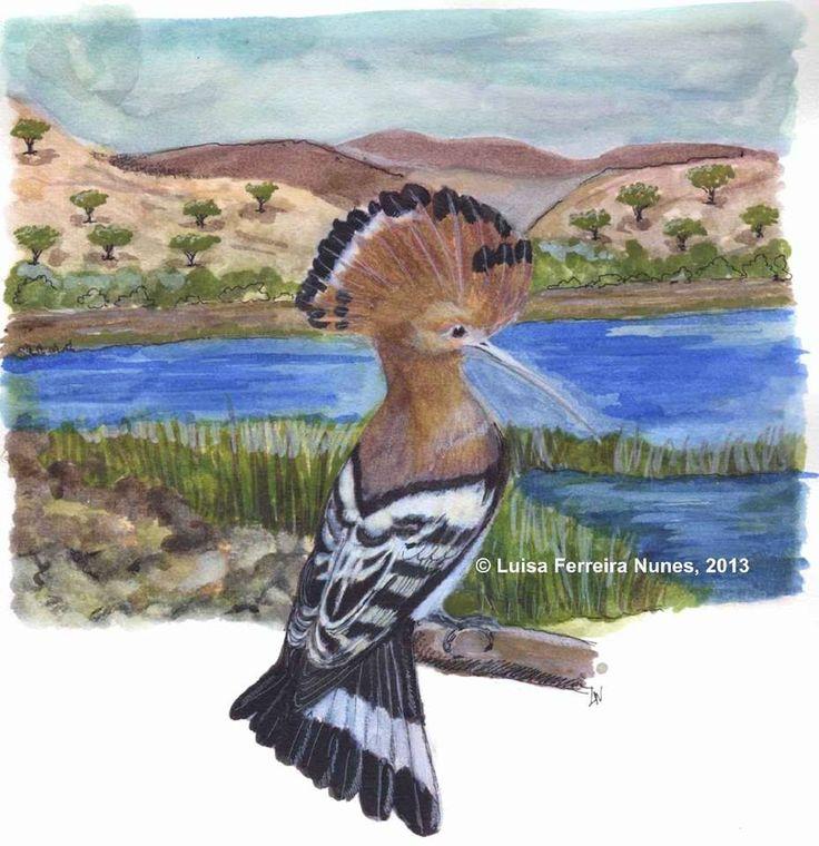 """A POUPA - ave migradora que passa o inverno em África e vem reproduzir-se à Europa na Primavera-Verão. Alimenta-se de insectos e a sua presença é notada por onde quer que passe, devido à sua crista de penas rebatível, conforme os seus humores. Não é exclusiva das zonas mediterrânicas e pode ser encontrada um pouco por todo o país. E é das aves mais belas de Portugal. O seu nome deve-se à sua voz particular """"upopup"""" , que a localiza.  Mais uma gravura do próximo DN 2014, de Luísa Ferreira…"""