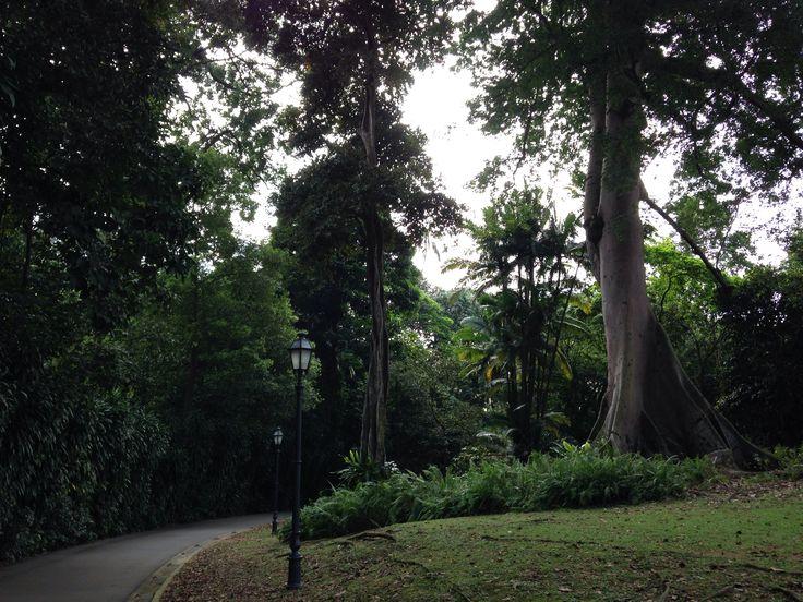 Botanical Gardens, Singapore. Run!