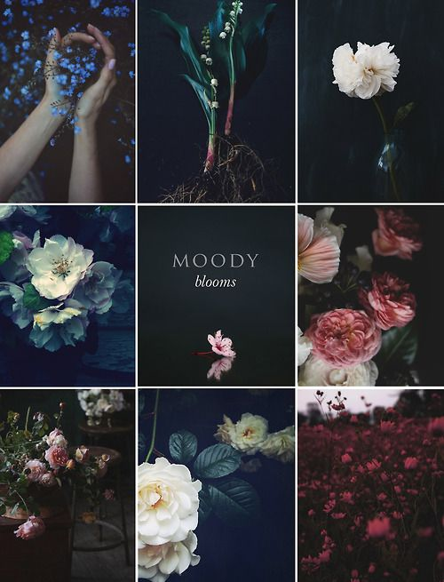 Moody Blooms: It is no secret that we are huge fans of Pinterest, we always love to see new trends in photography emerging through our favourite pinners. Weve been aware of a new form of botanical photography emerging for some time, we have aptly named it Moody blooms, flora and fauna is given a deep and hazy filter making them appear all the more beautiful as they pop forward from there moody backdrops.