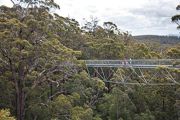 Treetop walk Denmark south west Australia