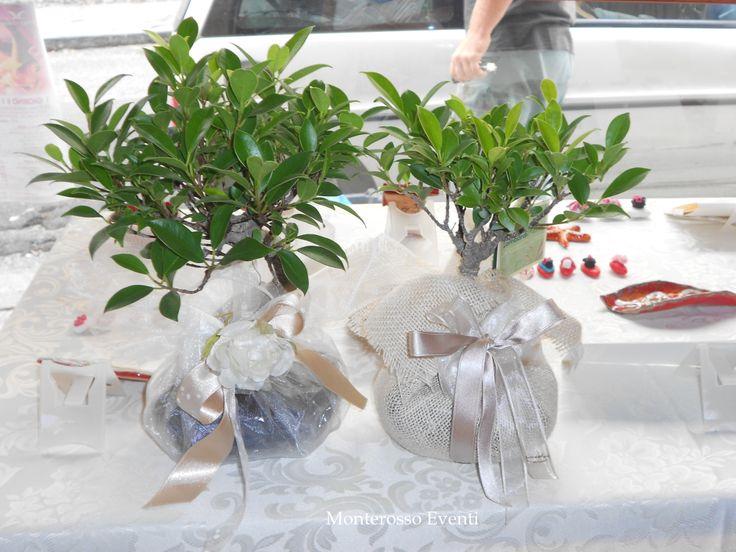 Bomboniere Matrimonio Natalizio : Bomboniere solidale bonsai pinterest