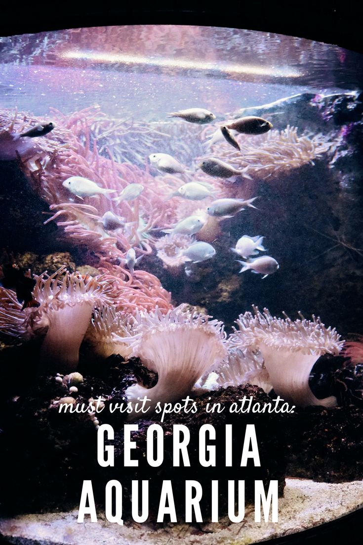 Georgia Aquarium | Visit Atlanta | What to do in Atlanta | Georgia Travel | Atlanta Travel | Family Things to do in Georgia | Family Things to do in Atlanta | Where to go in Atlanta