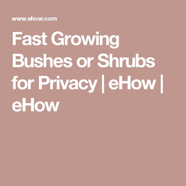 Fast Growing Bushes or Shrubs for Privacy | eHow | eHow