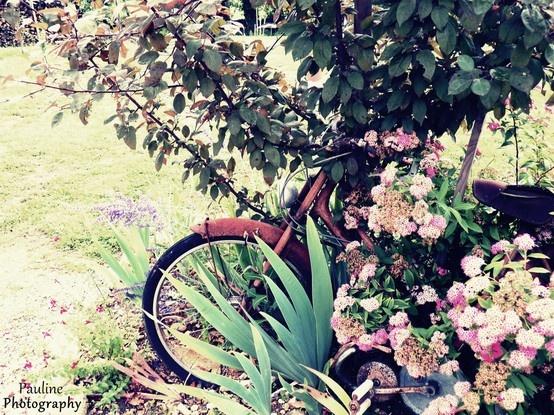 Bicyclette dans les fleurs. Vintage