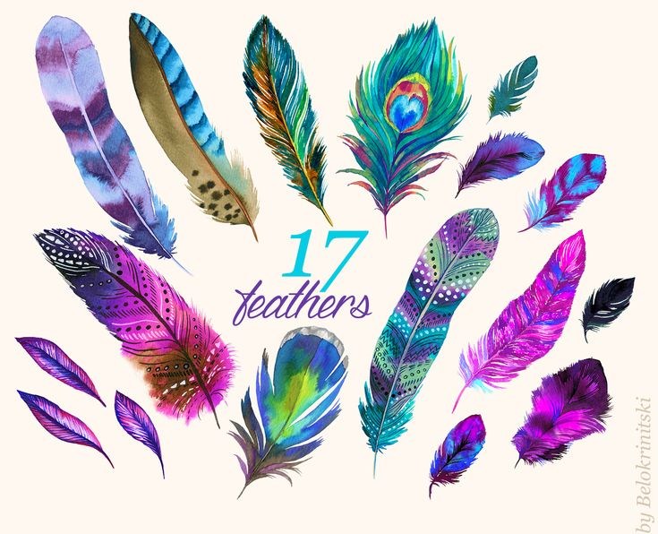 Watercolor Feathers by RosaPompelmo on @creativemarket