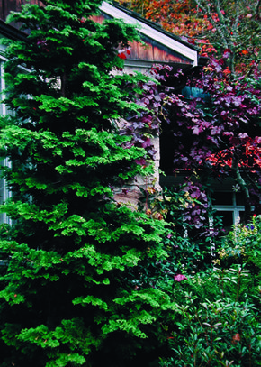17 Best Images About Yard And Garden On Pinterest Arbors English Cottage Gardens And Pathways