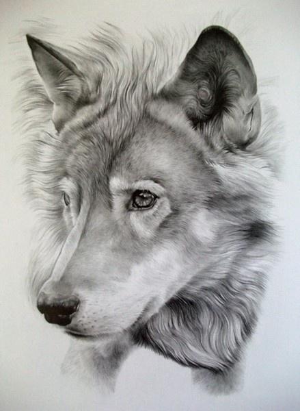 wolf amanda_kay_roppWolf Tattoo, Wolf Sketch, Wolf Drawing, Beautiful Wolf, Art Sketches, Wolves, Pencil Drawing, Pencil Art, Animal