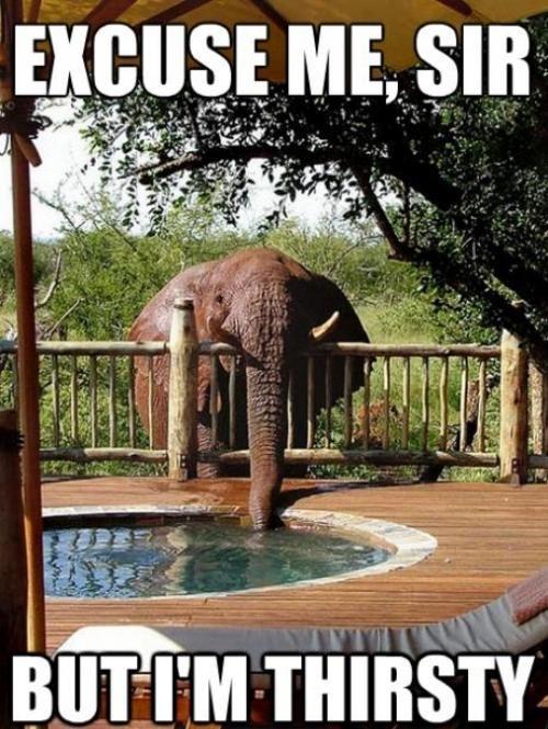 Okay, Mr. elephantSouthafrica, Elephant, Thirsty, South Africa, Hot Tubs, Pools, Drinks, Backyards, Animal