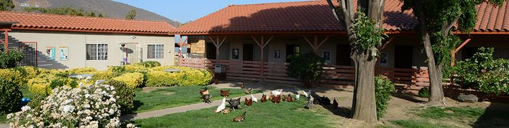 Los Angeles farm sanctuary. only does tours on sundays.  5200 Escondido Canyon Road Acton, CA 93510