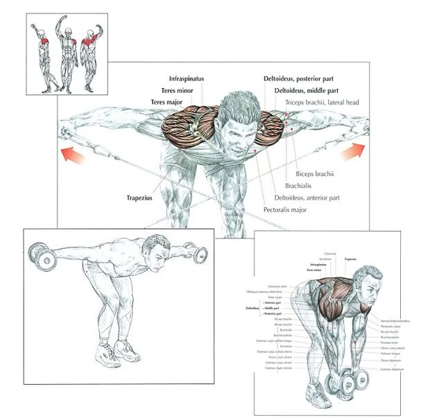 25+ best ideas about Lateral Raises on Pinterest
