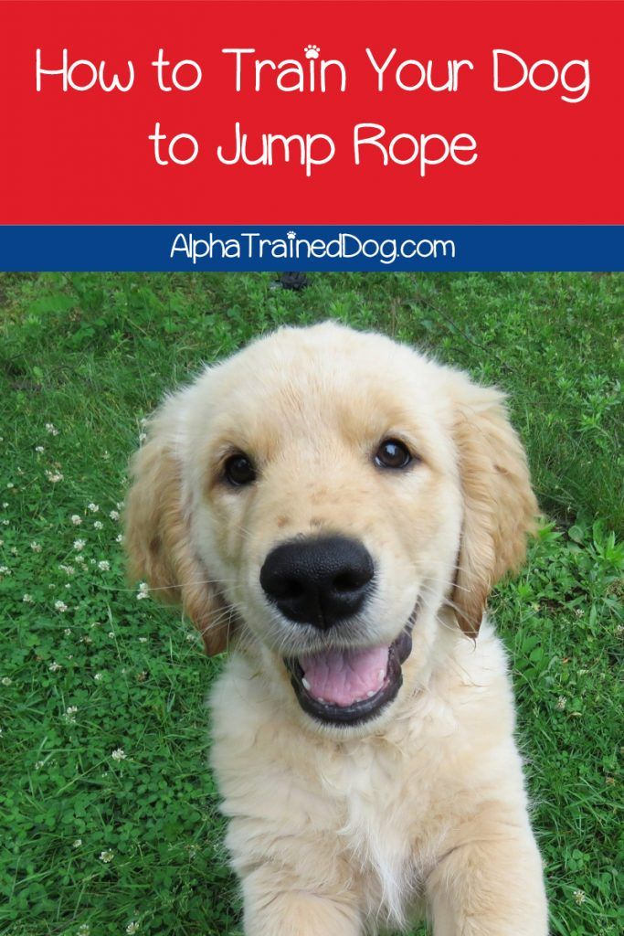 How To Teach A Dog To Jump Rope In 2020 The Perfect Dog Dog
