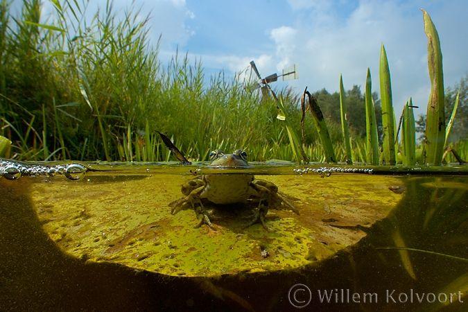 onderwaterfotografie in Hollands landschap, foto van Willem Kolvoort