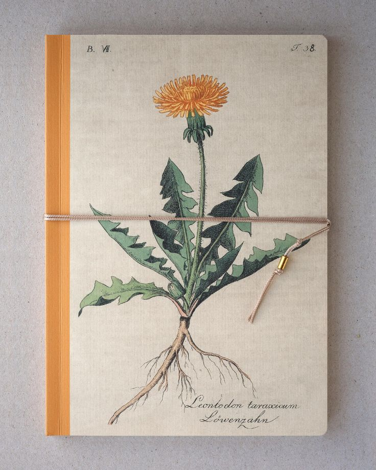 Notebook, Sketchbook- Dandelion, Blowball, Taraxacum  10 €/one https://www.etsy.com/listing/538368205/notebook-sketchbook-dandelion-blowball?ref=shop_home_active_12